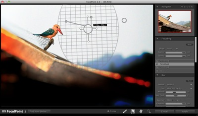 Kingfisher focalpoint